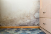 Housing Survey Reveals 12% of Social Housing Residents in England and Wales Affected by Mould and Damp