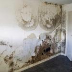 Housing & Regeneration | An end to damp damage?