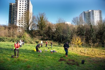 100 trees to mark 100 years of council housing in Nottingham