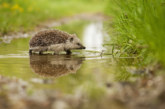 ACO announces new webinar series to tackle destruction of habitats